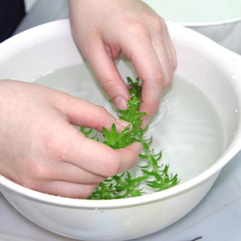 手洗い作業による大きなサイズの害虫の除去