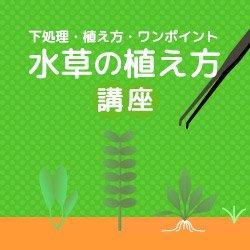 水草の植え方講座
